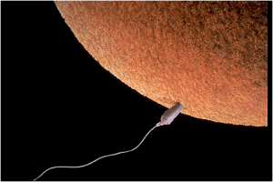 fertilization-image